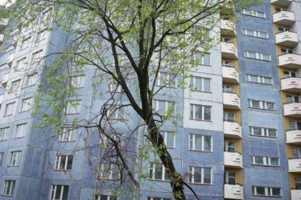 Петербург: девочка заставила мальчика спрыгнуть с 8 этажа и ушла