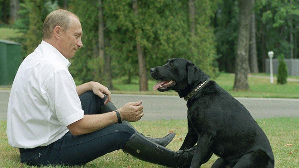 Какие президенты - такие у них и псы