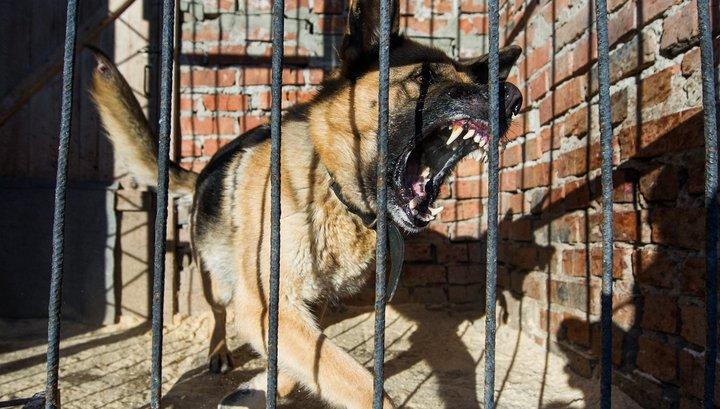 В МВД составили список опасных пород собак