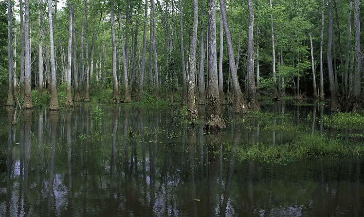 Какие тайны скрывают болота?. Аномальные явления, необъяснимые феномены, НЛО