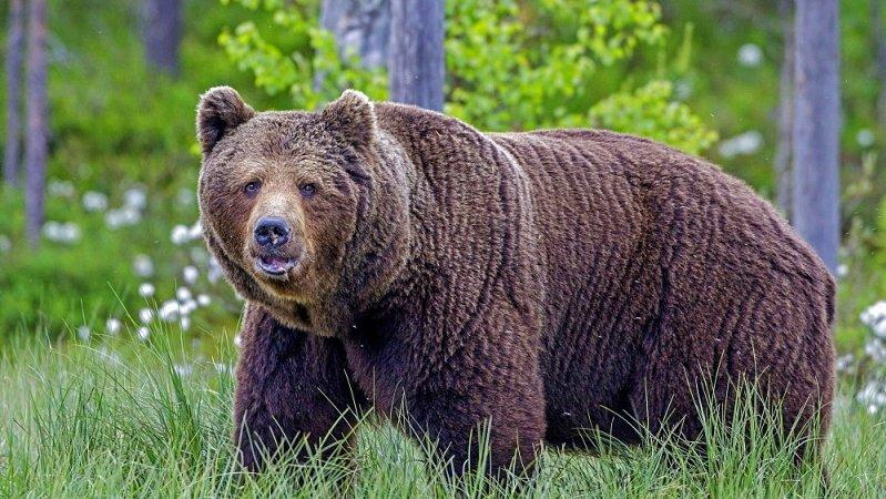 Мальчика искали три дня: медведь сотворил с ним невероятное