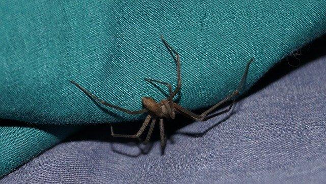 Причина, по которой в квартире заводятся пауки
