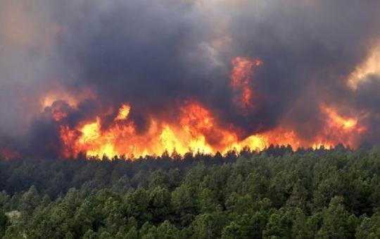 Красноярский губернатор назвал тушение лесных пожаров бессмысленным