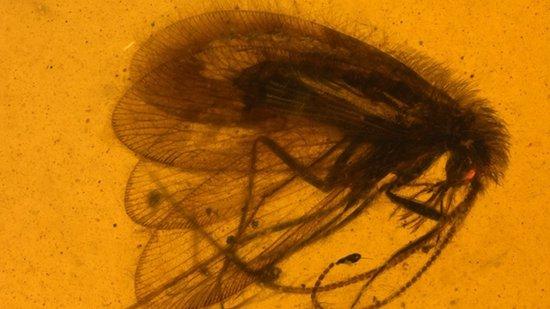 Российские палеонтологи нашли в янтаре тупиковую ветвь эволюции
